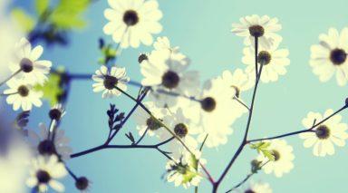 cropped-ws_spring_flowers_1920x1080.jpg