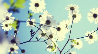 cropped-ws_spring_flowers_1920x1080.jpg